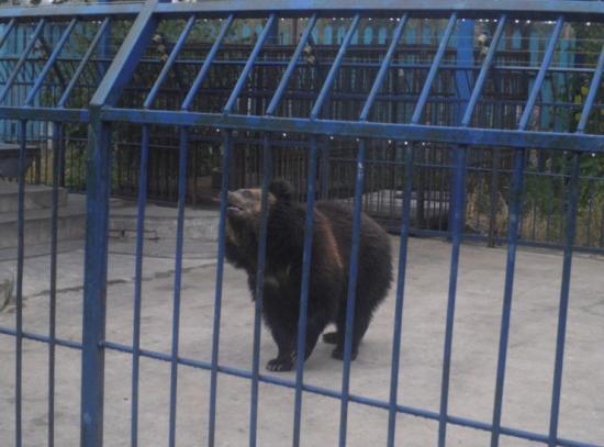 棋盘山野生动物园(三)