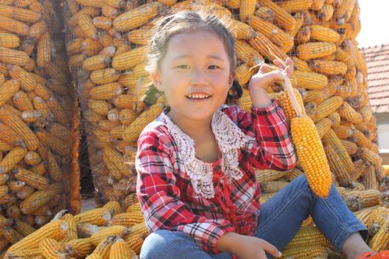 快乐老家十---玉米大丰收【秋天记忆】