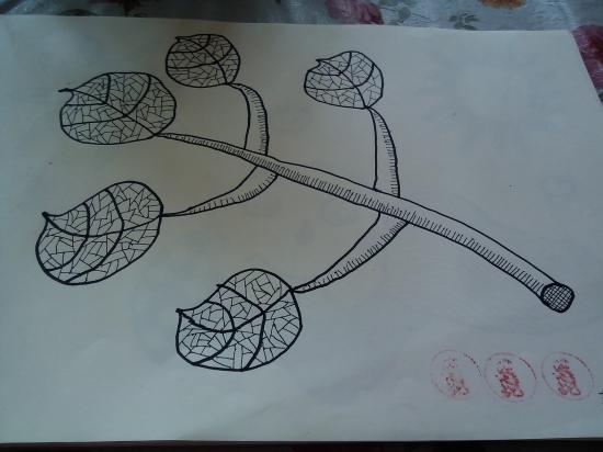各种树叶儿童线描