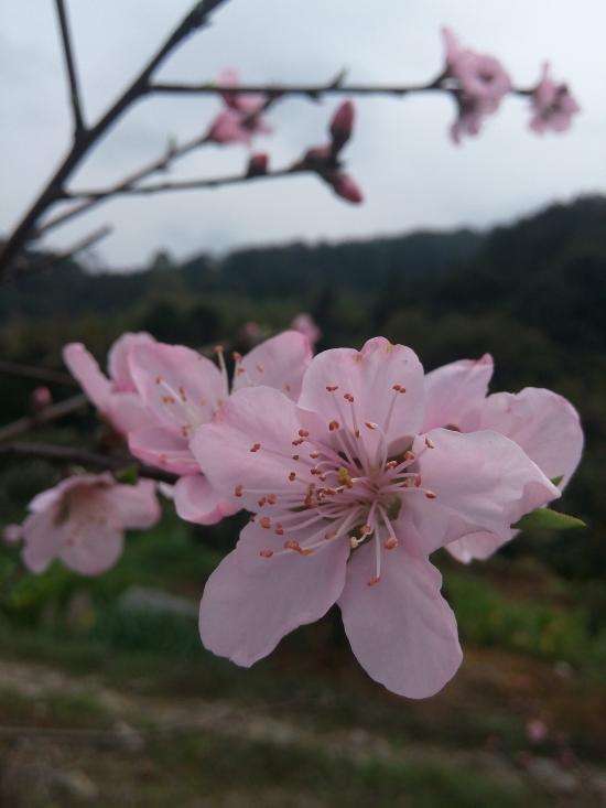 我也是春天里的一朵花